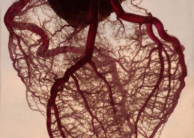 corazón en Cardiología Online Info
